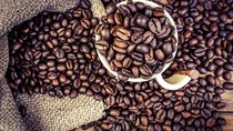 Giá cà phê ngày 07/9 hạ nhiệt 200 đồng/kg