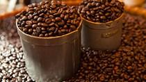 TT cà phê ngày 26/12: Im ắng ở mức 32.200 – 33.300 đồng/kg