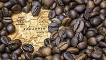 TT cà phê ngày 27/8: Phiên chững giá thứ hai giữ ở mức 32.100 – 33.200 đồng/kg