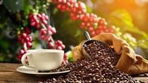 TT cà phê tuần 28: Giá sụt giảm, giao dịch hết sức trầm lắng