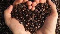 TT cà phê ngày 03/7: Lui về mốc 33.000 – 34.300 đồng/kg sau khi đảo chiều giảm giá