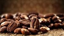 TT cà phê ngày 13/8: Lao dốc thêm 400 đồng/kg xuống mức thấp mới