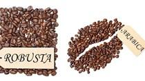 TT cà phê ngày 26/02: Giá toàn sắc xanh cả trong nước và thế giới