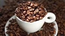 TT cà phê ngày 13/01: Giá tuột dốc chạm mức thấp nhất ở 30.900 đồng/kg