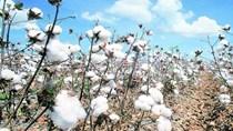 Tradingcharts: Giá nông sản kỳ hạn thế giới ngày 10/3/2021