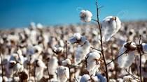 Tradingcharts: Giá nông sản kỳ hạn thế giới ngày 11/3/2021