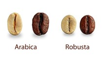 Giá cà phê hôm nay 03/6: Duy trì vững trên hai sàn giao dịch thế giới