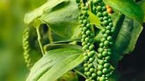 TT cà phê ngày 14/11: Giá lấy đà bật tăng mạnh mẽ, chạm mức 34.000 đồng/kg
