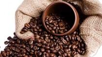 TT cà phê ngày 11/6: Chững giá ở 31.700 – 32.200 đồng/kg
