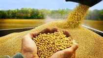 Giá khô đậu tương kỳ hạn tại CBOT ngày 17/11/2017