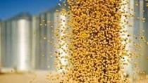 Giá khô đậu tương kỳ hạn tại CBOT ngày 29/12/2017