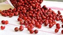 TT hạt tiêu ngày 09/12: Giá duy trì trong phạm vi 40.000 – 42.000 đồng/kg