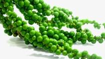 TT hạt tiêu ngày 03/8: Giữ vững mức giá phiên cuối tuần ở 45.000 – 48.000 đồng/kg