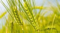 Giá nông sản và kim loại thế giới ngày 09/3/2021