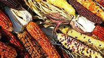 Giá nông sản và kim loại thế giới ngày 13/11/2020