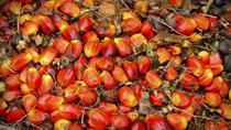 Giá dầu cọ cao có thể làm trì hoãn kế hoạch B40 của Indonesia