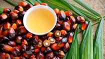 Giá dầu cọ Malaysia tăng 5% lên mức cao nhất trong hai tuần, đường sụt giảm