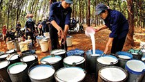 Cung không đủ cầu khiến giá cao su Đông Nam Á tăng cao