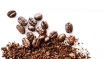 Giá cà phê hôm nay 26/10: Sắc xanh bao phủ khắp các sàn giao dịch