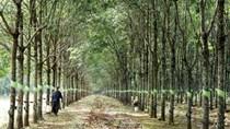 Tập đoàn Cao su Việt Nam muốn bổ sung ngành nghề chính
