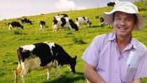 HAGL đầu tư dự án 3.600 tỷ đồng nuôi bò tại Bình Định