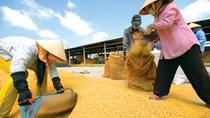 Trung Quốc muốn nhập khẩu gạo, cao su Việt Nam