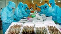 Cơ hội cho tôm Việt Nam lấn sân thị trường EU