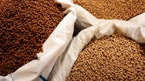 Đến 15/9, Việt Nam chi gần 4 tỷ USD nhập thức ăn chăn nuôi và nguyên liệu