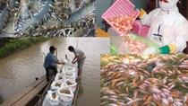 8 tháng xuất khẩu thủy sản sang Mỹ giảm 30%, giá cá tra chạm đáy