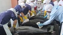 Canada - thị trường hấp dẫn cho cá ngừ Việt Nam