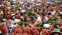 Chính thức áp dụng quy tắc xuất xứ trong khu vực thương mại ASEAN- Úc -New Zealand