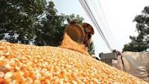 Vào TPP, Việt Nam vẫn nhập 70% nguyên liệu thức ăn chăn nuôi