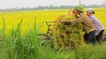Bản tin tài chính kinh doanh sáng 28/9: Nông dân Thái Bình thiệt hại lớn vì mất mùa