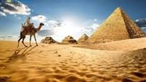 Đẩy mạnh xuất khẩu vào thị trường Ai Cập