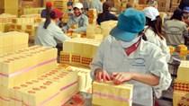 Kim ngạch xuất khẩu giấy và sản phẩm từ giấy tăng nhẹ