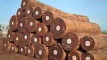 Giá nhập khẩu gỗ nguyên liệu tuần từ 10/8 – 16/8/2018