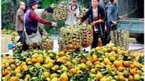 Nông sản Tuyên Quang đến thủ đô
