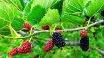 TT trái cây tuần qua: Giá biến động ở cả trong nước và thế giới