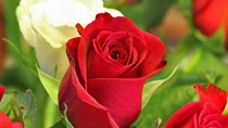 Mẹo giữ hoa tươi lâu trong 9 ngày Tết