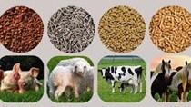 Tình hình sản xuất, xuất khẩu thức ăn chăn nuôi và nguyên liệu 9 tháng năm 2019