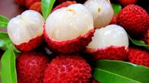 TT Trái cây tuần qua: Vải thiều và sầu riêng giá tăng cao, mít Thái giảm mạnh