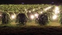 EVNSPC: Cán đích đổi 2 triệu đèn sợi đốt