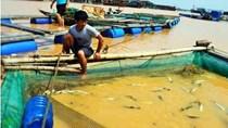 Sản lượng nuôi trồng thủy sản 9 tháng tăng so với cùng kỳ