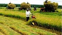 Tình hình sản xuất nông nghiệp tháng 10 và 10 tháng đầu năm 2017