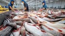Giá cá tra nguyên liệu tăng nhẹ nhưng vẫn ở mức thấp