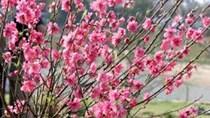 TT hoa cây cảnh và quả tuần đến ngày 14/1/2017