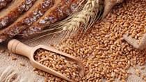 Nhập khẩu lúa mỳ giảm sau 3 tháng tăng liên tiếp