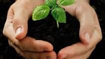 Phát triển phân bón hữu cơ cần những bước đi nào?