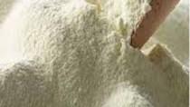 Sản lượng sữa của New Zealand tăng gây áp lực lên giá
