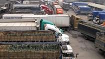 Xuất khẩu gắn với xây dựng vùng nguyên liệu